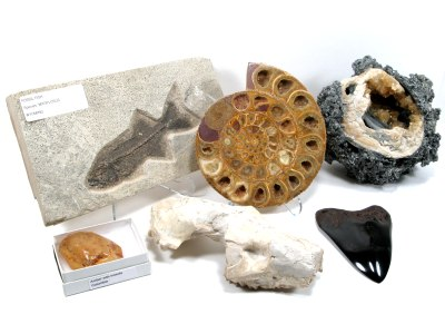Exotic Fossils
