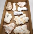 Fairy Stone Concretions, Large, By the Flat