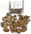 Dalmatian Jasper, GeoCenter Size - 100 Pieces